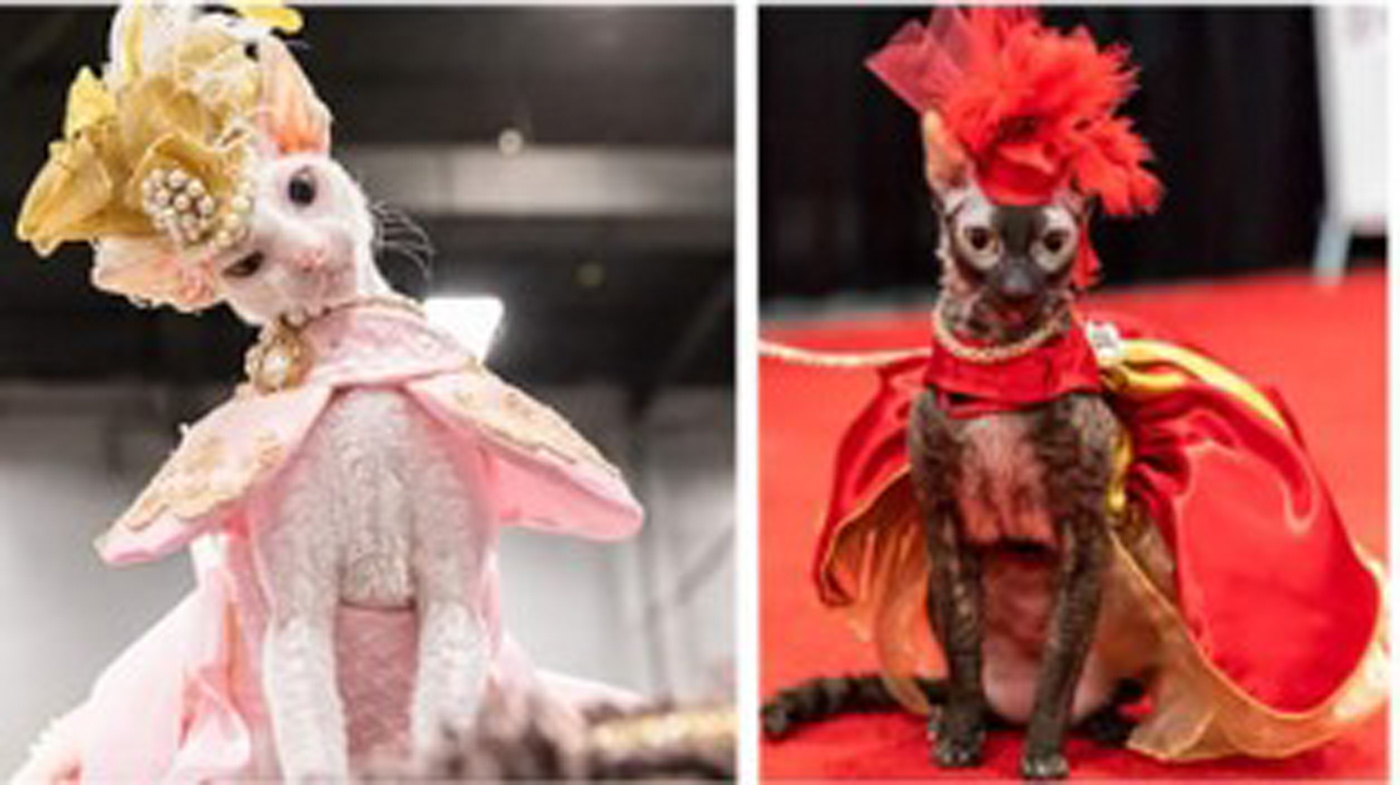 Famous Fashionista Cats